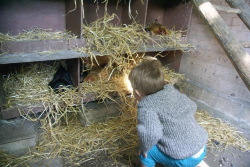 Visite des poules à Vélizy